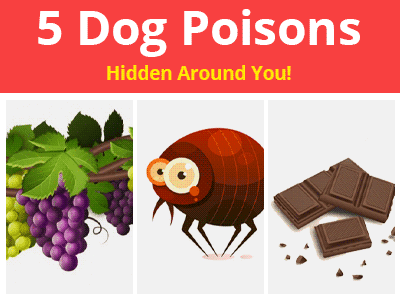 5 Dog Poisons Hidden Around You