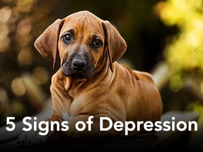 5 Signs of Depression