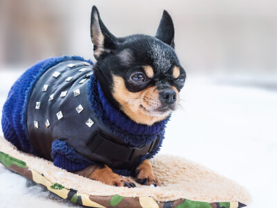 5 Winter Care Tips For Dogs