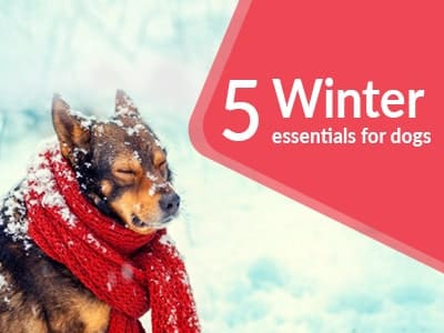 5 Winter essentials for your Dogs