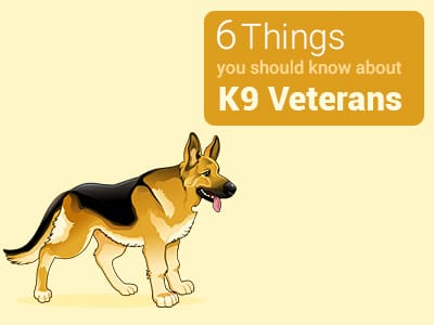 6-Things-you-should-know-about-k9-vetrans