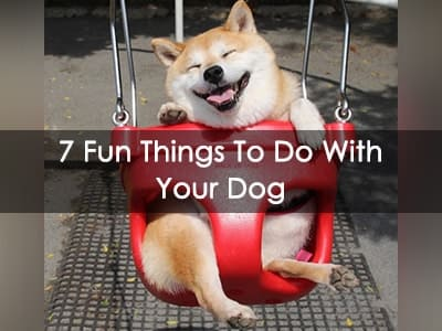 7 Fun Things To Do With Your Dog