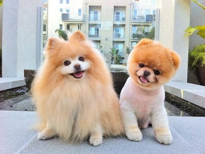 8 Dog grooming tips planning