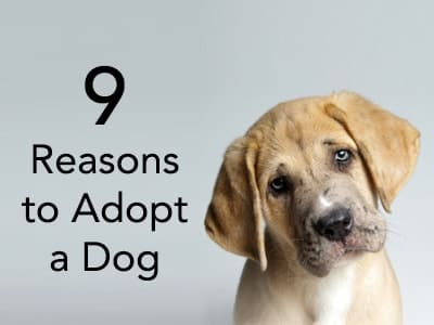 9 Reasons to Adopt a Dog