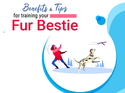 Benefits and tips for training your fur bestie