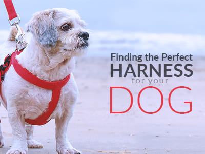 Find the perfect harness for your dog