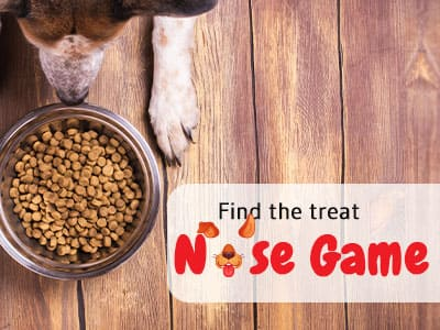 Find the treat – Nose game