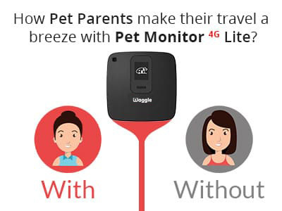 How pet parents make their travel a breeze with Pet Monitor 4G Lite