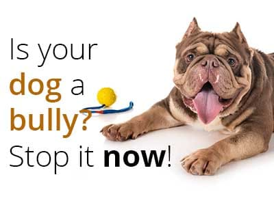 Is your dog a bully? Stop it now