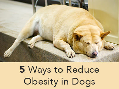 5 Ways to Reduce Obesity in Dogs