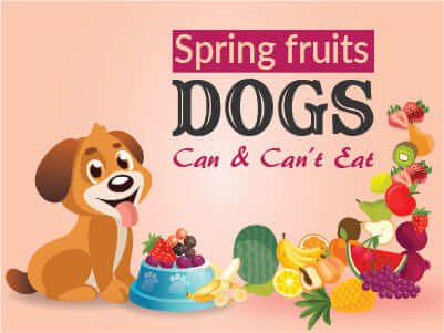 Spring Fruits