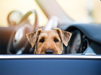 Summer-safety-tips-for-every-pet-parent