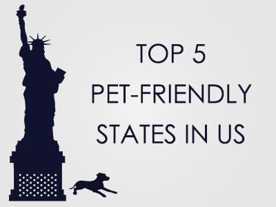 Top 5 Pet-Friendly States in USA