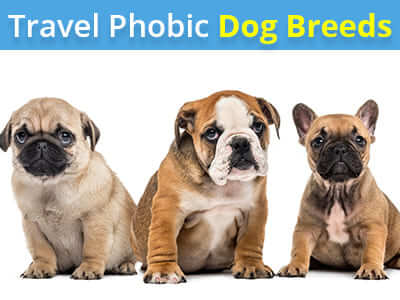 Travel Phobic Dog Breeds