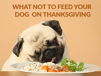 What not to feed your dog on Thanksgiving