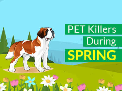 Pet Killers During Spring
